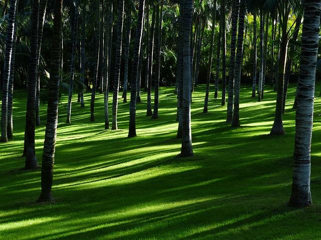 lesní tráva