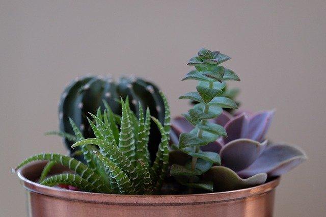 květináč s kaktusy různých druhů