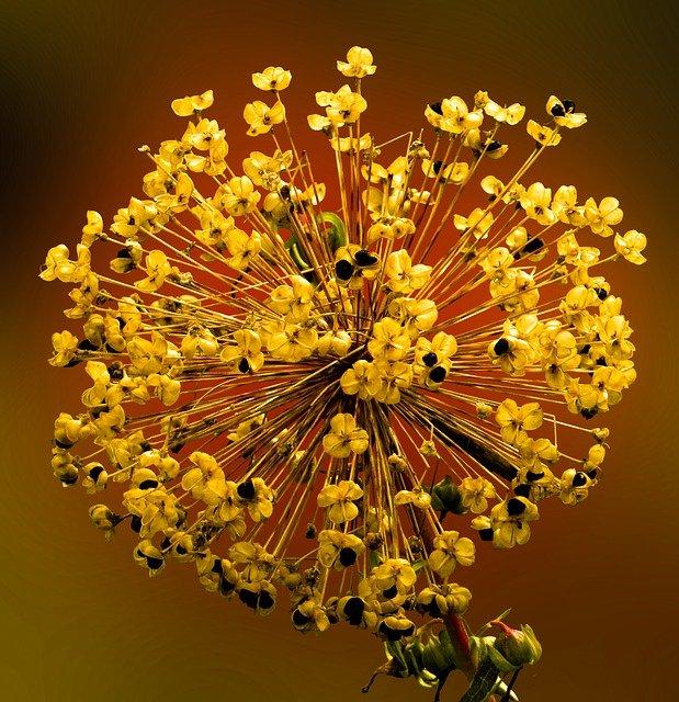 Semena rostlin a jak je uchovávat