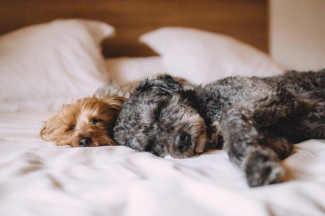 sladký spánek psů